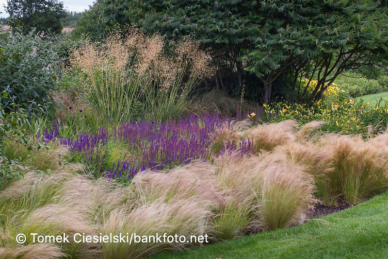 Combination of grass and perennials with domination of ornamental grasses