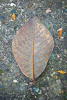 Closeup of an autumn leaf&#xA;<br />