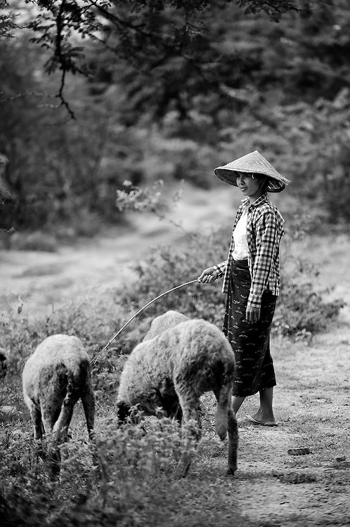 A sheep farmer near Mandalay, Myanmar