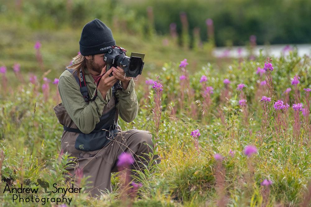 Photographer Dan Mele capturing images of fireweed - Katmai, Alaska