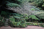 elaborate botanical tree and plant garden