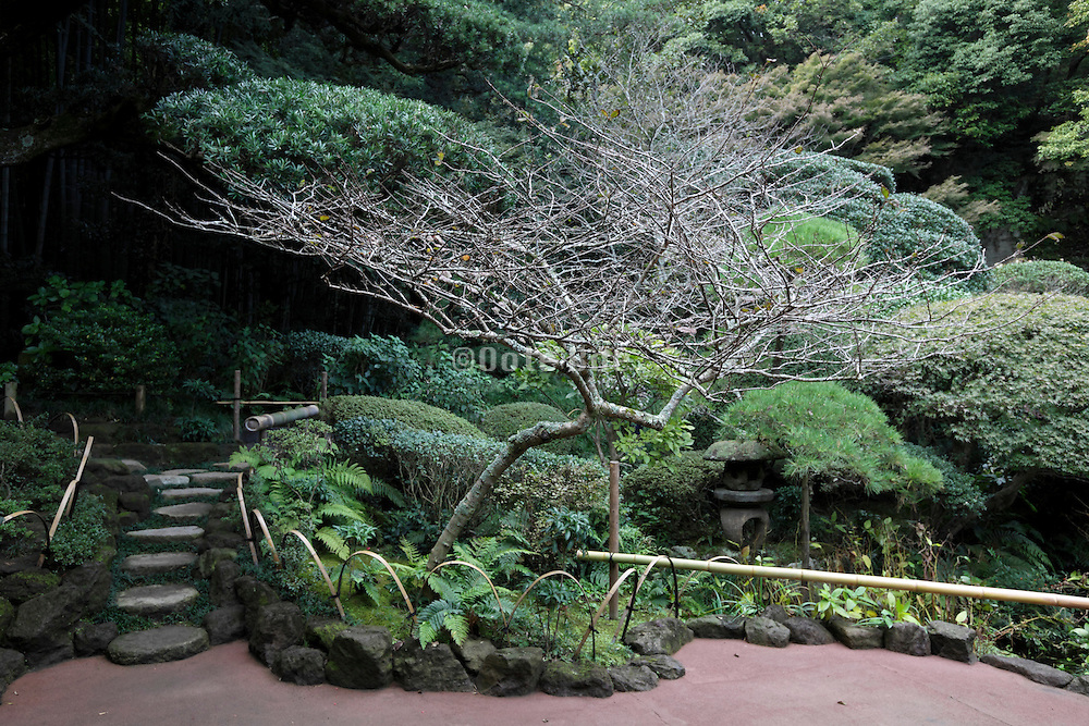 elaborate botanical tree and plant garden