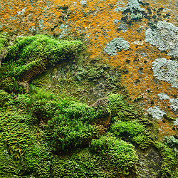 Moss and lichen on a boulder in Lost River Gorge in New Hampshire's White Mountains. North Woodstock.