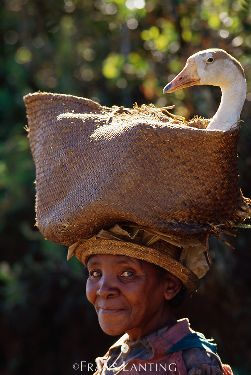 Woman taking goose to market, Central Madagascar