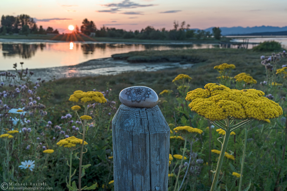 A decorated rock sits on a fence post at Blackie Spit in Surrey, British Columbia, Canada.  The large flower umbels next to the post are Fernleaf Yarrow (Achillea filipendulina).