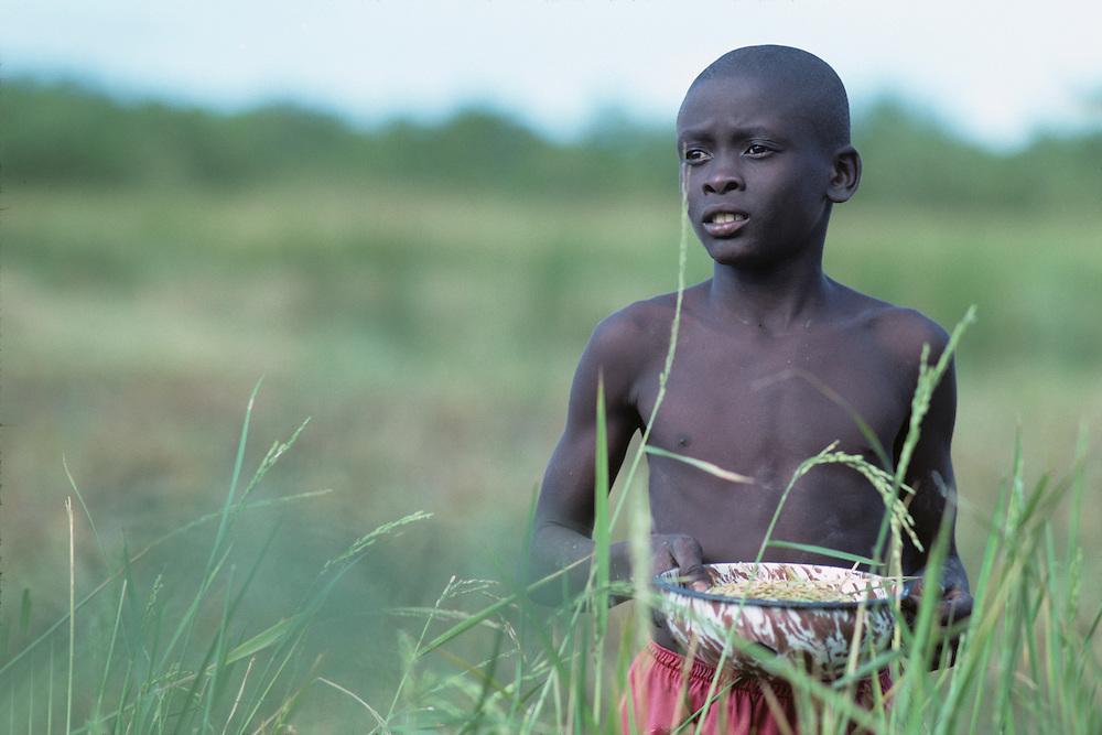 Haiti, Jacmel, Young boy harvest grain in field
