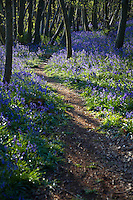 Purple Wildflowers on Path