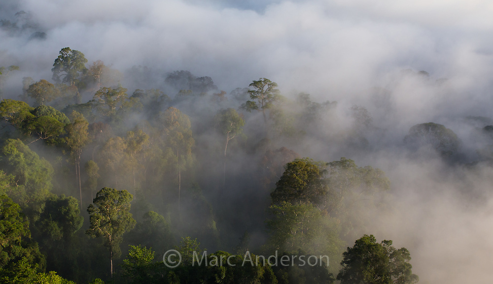 Early morning mist rising in tropical rainforest, Danum Valley, Sabah, Malaysia