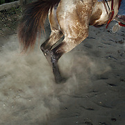"A cowboy and his horse burst out of the gates, kicking up dust, while competing in a lasso competition in San Carlos, near Boquete, Panama, on February 11, 2007. In the competition, each heat features one town's team versus another in a tournament bracket style. The speed of the calf's capture determines points.  ..""Dust"""