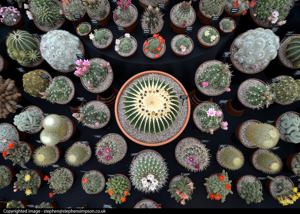 © Licensed to London News Pictures. 02/07/2012. East Molesey, UK A display of Cacti. The RHS Hampton Court Palace Flower Show 2012. The show runs 3-8 July, 2012. Photo credit : Stephen Simpson/LNP