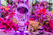 The future of food? Hydroponic plants on the Rocket Science stand are beig developed for use in space and as one of the many ways to feed an ever expanding population here on Earth. RHS Chelsea Flower Show, Chelsea Hospital, London UK, 18 May 2015.