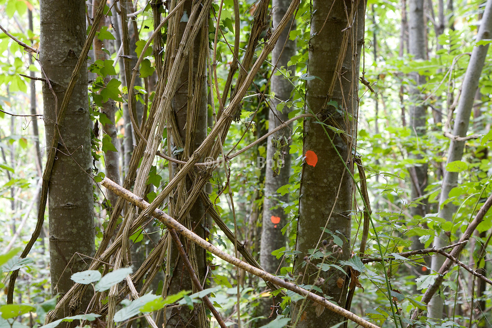 tree trunks with orange paint markings in a forest