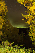 The Northern Lights framed by trees at the Aigas Field Centre in Scotland.