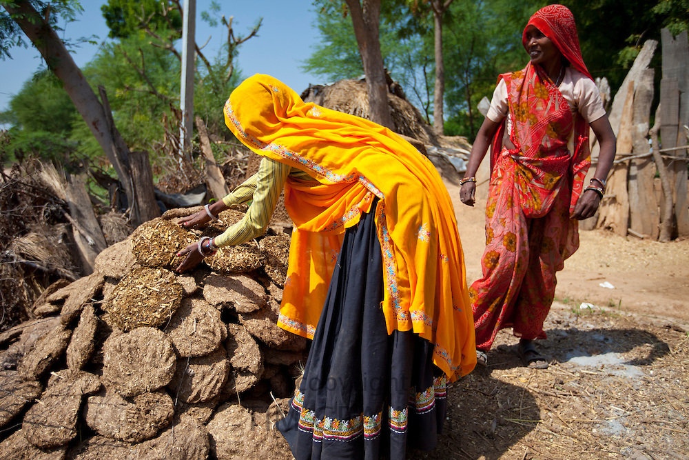 Indian woman villagers drying cow dung for cooking fuel at Kutalpura Village in Rajasthan, Northern India RESERVED USE - NOT FOR DOWNLOAD -  FOR USE CONTACT TIM GRAHAM