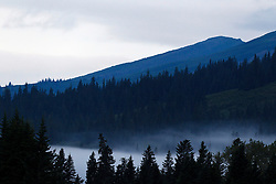 Saddle Mountain with morning fog in between evergreen trees, Lake Clark National Park, Alaska, United States of America