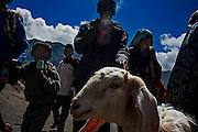 Tenggerese man bring a goat as an offering to the spirit of Bromo volcano during Yadnya Kasada ritual in Lumajang, East Java, Indonesia, July 23, 2013. Tenggerese believe their ancestors Princes Roro Anteng and Prince Joko Seger sacrificed their 25th child to the volcano after their wish to be given children were fulfilled by the gods. Later on, Tenggerese continue the ritual by delivering offerings such as vegetables, fruits, money, livestock and paddy to the crater of Bromo volcano.
