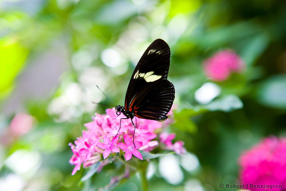 A butterfly in a garden setting.