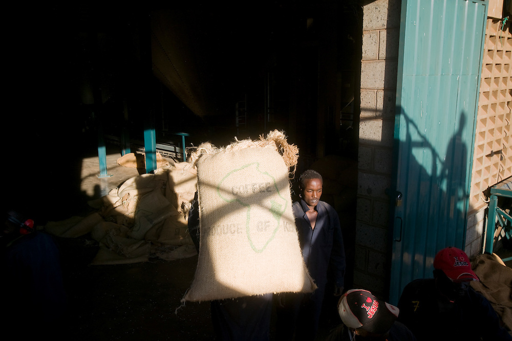 Africa, Kenya, Ruira, (MR) Workman carrying bags of  freshly picked Arabica coffee beans inside sorting facility Socfinaf's Oakland Estates coffee plantation