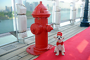 Ella Bean, a Yorkie mix, enjoys the remastered kennels on the Queen Mary 2, the only passenger liner to carry pets, Wednesday, July 6, 2016, at Brooklyn Cruise Terminal in New York, its U.S. homeport.  The Queen Mary 2 spent 25 days in dry dock and a refit that cost in the region of $132 million, renovating its staterooms, restaurants and public areas.  (Diane Bondareff/AP Images for Cunard)