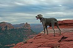 Dog on the Edge