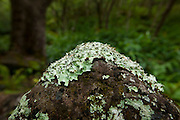 Rock with lichen, moss, Kalalau Valley,Napali Coast, Kauai, Hawaii