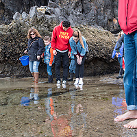 People exploring the tide pools at low tide near Haystack Rock on Cannon Beach, Oregon.