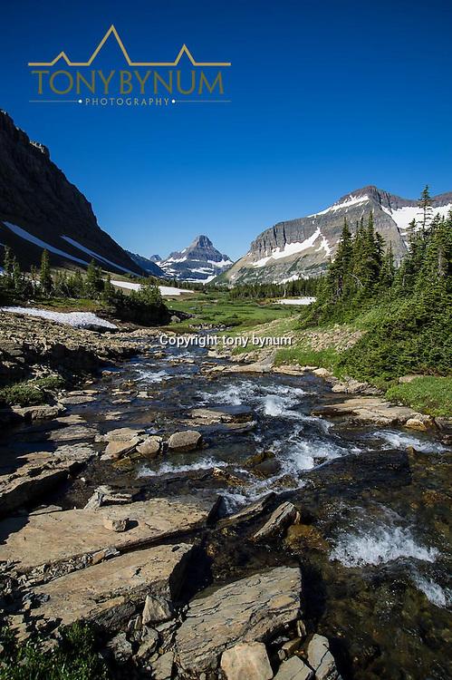 glacier national park preston park siyeh pass, reynolds mountain