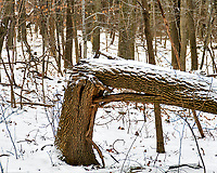 """""""If a tree falls in a forest and no one is around to hear it, does it make a sound?""""  A winter walk at the Sourland Mountain Preserve. Image taken with a Nikon D300 camera and 18-200 mm lens (ISO 200, 90 mm, f/5.6, 1/125 sec)."""
