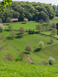 Scenic view forest and green landscape near Mondhalde, Baden-Wuerttemberg, Germany