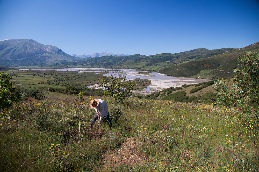 A laborer from Kuta works hoes the earth around one of Taulant Hazizaj's 3,800 olive trees above the Vjosa River. The entire section pictured here will be flooded by the reservoir, if the Pocem dam is built. The Vjosa River in Albania is the last large free flowing river system in Europe. The search for more energy, through hydroelectric dams threatens this natural resource.