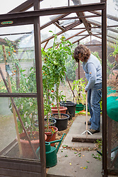 Tidying a greenhouse in autumn. Sweeping up debris with a brush