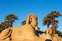 Egypte, Haute Egypte, vallée du Nil, Louxor, temple de Louxor classé Patrimoine Mondial de l'UNESCO, avenue des Sphinx // Egypt, Nile Valley, Luxor, The Temple of Luxor, Sphinxes avenue