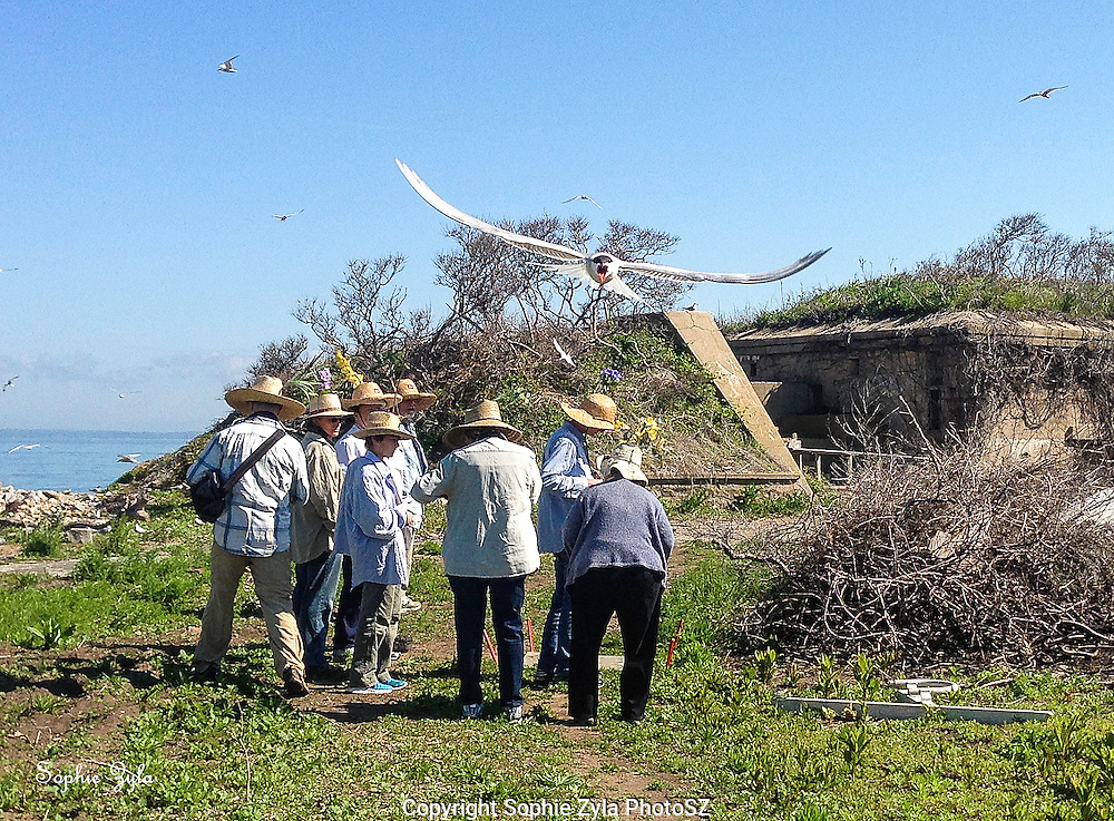Common Tern welcome and GGI work crew