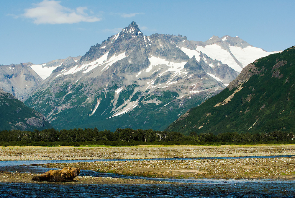 USA, Katmai National Park (AK).Katmai landscape with brown bear (Ursus arctos) at Kukak Bay's tidal flats