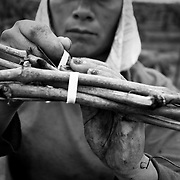 A campesina works the fields tying grape vines near Fresno, California. Many women who work the fields have had to deal with sexual harassment and assault. Please contact Todd Bigelow directly with your licensing requests.