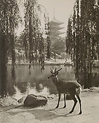 """Matsuyama Rokumeiyen Studio<br /> - Original vintage silver gelatin silver print, c1930.<br /> - How to See Nara guidebook (Japan Tourist Bureau), 1936.<br /> <br /> Double Vintage: Original vintage photograph by Matsuyama Rokumeiyen Studio and tourist guidebook of the same photo.<br /> <br /> Large format vintage and original photograph by Matsuyama Rokumeiyen Studio of Nara. Done in a pictorialist style, this artistic view shows one of many wild deer that freely roam the temple complex of Nara Park. This view was taken in front of Sarusawa no Ike pond in the late 1920s or early 1930s. The Matsuyama Rokumeiyen Studio was a popular photo studio in Nara during the 1920s and 1930s and their pictorialist images were often used to promote the city. Accompanying this print is a tourism guide in English titled """"How to See Nara"""", published by the Japan Tourism Bureau's Nara Municipal Office. It is dated January 1936. <br /> <br /> Photograph: 8 5/8 inches x 10 5/8 inches (220 mm x 271 mm).<br /> Guidebook: 5 1/8 inches x 7 3/8 inches (130 mm x 187 mm), 12 pages.<br /> <br /> Condition: Vintage original matte gelatin silver photograph in good condition. The Guidebook is in good shape with clean contents and cover.<br /> <br /> Price: ¥80,000<br /> <br /> <br /> <br /> <br /> <br /> <br /> <br /> <br /> <br /> <br /> <br /> <br /> <br /> <br /> <br /> <br /> <br /> <br /> <br /> <br /> <br /> <br /> <br /> <br /> <br /> <br /> <br /> <br /> <br /> <br /> <br /> <br /> <br /> <br /> <br /> <br /> <br /> <br /> <br /> <br /> <br /> <br /> <br /> <br /> <br /> <br /> <br /> <br /> <br /> <br /> <br /> <br /> <br /> <br /> <br /> <br /> <br /> <br /> <br /> <br /> <br /> <br /> ."""