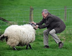Willie Rennie, Kelty, 21-4-2017<br /> <br /> Willie Rennie tries to control a sheep<br /> <br /> (c) David Wardle | Edinburgh Elite media