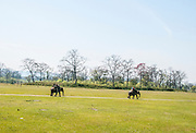 Elephant safari, Chitwan National Park, Nepal