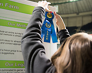 Allison Cook hangs her 1st place ribbon during the Student Research Expo.