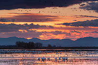 Merced National Wildlife Refuge Winter Sunset, California