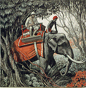 Tiger hunting in Indian jungle, late 19th-early 20th century. White hunter wearing solar topee and carrying a rifle, seated in howdah on back of a fine tusker.   Mahout peers intently ahead.