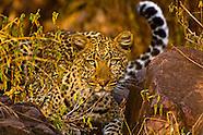 Tanzania-Serengeti National Park