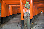 Torii gates Fushimi Inari Taisha Shrine Kyoto Honshu Japan
