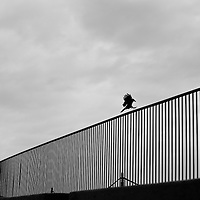 Crow with wings and feet stretched out, about to land on a curved metal fence.