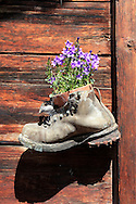 A retired hiking boot sports a pot of flowers on a mountain chalet door, Switzerland