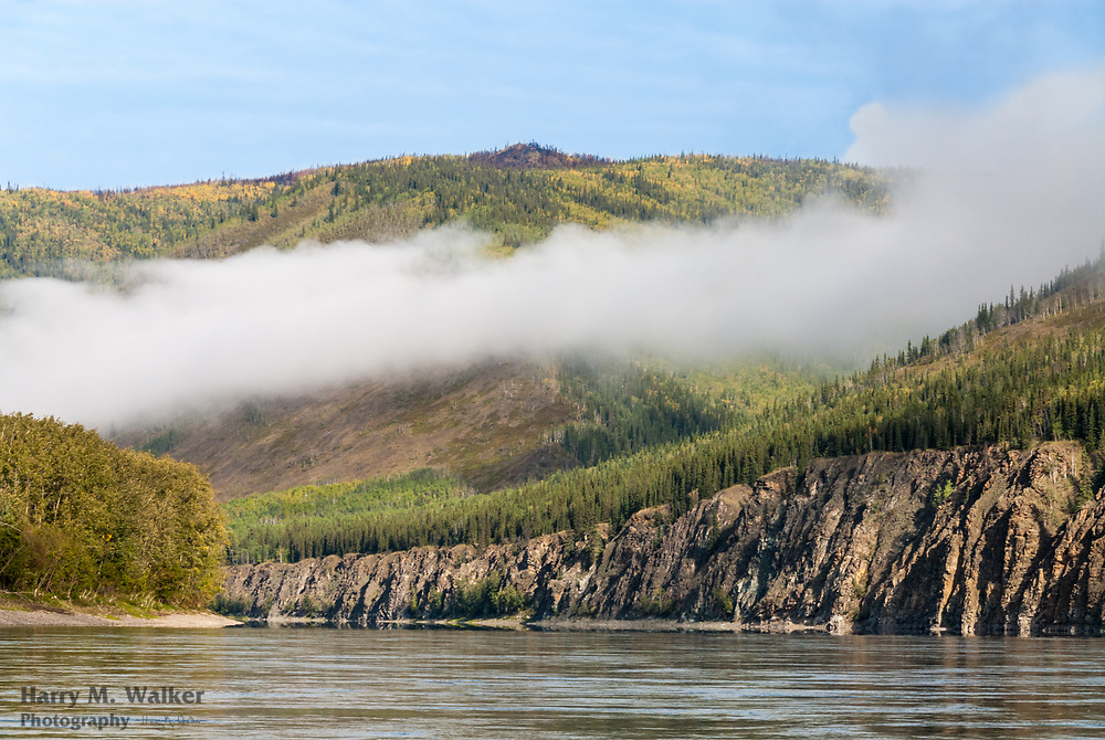 Aspen and birch trees beginning to change colors in early fall; Yukon River; south of Dawson City; Yukon Territory; Canada; morning fog burning off