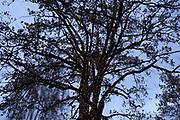 vinterlandskap <br /> &copy; Foto Dag W. Grundseth <br /> Bildet m&aring; ikke publiseres i noen form, elektronisk eller p&aring; trykk uten avtale med fotograf.<br />  2017