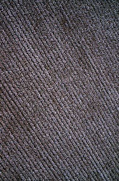 Stock photo of an aerial view of a large cotton field