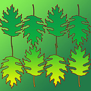 Digitally enhanced image of a multi oak leaf pattern on green background