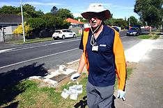 Auckland-MPI find Tau fly in trap, Manurewa